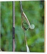 Raindrops On Grass Wood Print