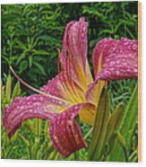 Raindrops On Lilly Wood Print