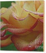 Raindrops On Petals Wood Print