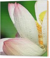 Raindrops On Pink Lotus Petals Wood Print