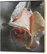 Raindrops On Roses Wood Print