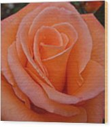 Raindrops On Roses Seven Wood Print