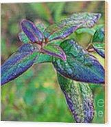Raindrops On The Leaves Wood Print