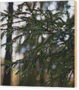 Raindrops On The Spruce Twig Wood Print