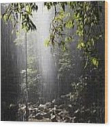Rainforest, Bellingen, Australia Wood Print