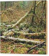 Rainforest Dusting Wood Print