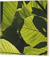 Rainforest Leaves Showing Sunlight Wood Print