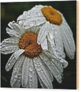 Rainy Day Daisies Wood Print
