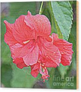 Rainy Day Hibiscus Wood Print