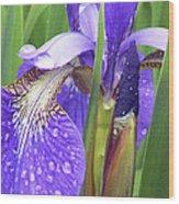 Rainy Day Iris  Wood Print