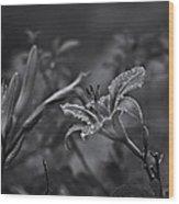 Rainy Day Lily Wood Print