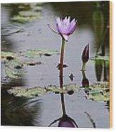 Rainy Day Lotus Flower Reflections V Wood Print