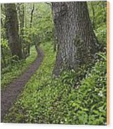 Ramsons By Path In Woods, County Louth Wood Print
