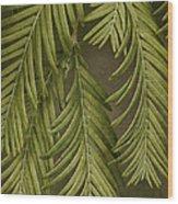 Random Nature Wood Print