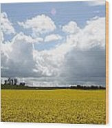 Rape Field Wood Print