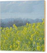 Rapeseed Flower Wood Print