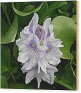 Rare Hawain Water Lilly Wood Print by Claude McCoy