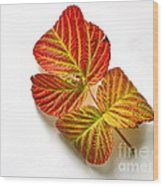 Raspberry Leaves In Autumn Wood Print