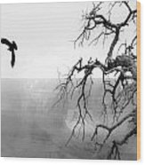Raven In Grand Canyon Wood Print