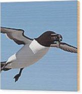 Razorbill In Flight Wood Print
