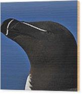 Razorbill Portrait Wood Print
