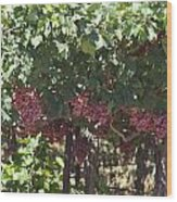 Ready To Harvest - Vineyard Wood Print