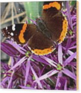 Red Admiral Butterfly Wood Print by Maria Scarfone