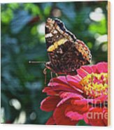 Red Admiral Probocis Wood Print