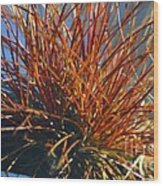 Red Air Plant Wood Print