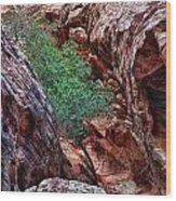 Red And Green Wood Print by Rick Berk