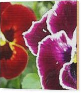 Red And Magenta Pansies Wood Print