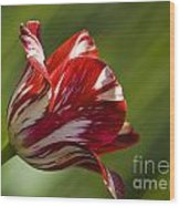 Red And White   Rouge Et Blanc Wood Print