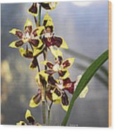 Red And White Orchid  Wood Print