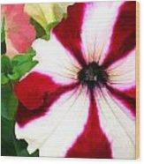Red And White Petunia Wood Print