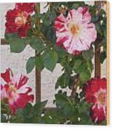 Red And White Roses Wood Print