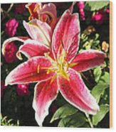 Red And White Tiger Lily Wood Print