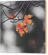 Red And Yellow Fall Leave's Closeup Wood Print