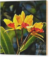 Red And Yellow Orchid Wood Print