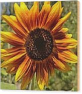Red And Yellow Sunflower Wood Print