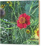 Red And Yellow Tiny Flowers Wood Print