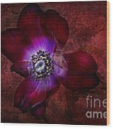 Red Anemone Wood Print