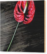 Red Anthrium Wood Print