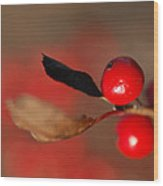Red As A Winterberry Wood Print
