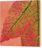 Red Autumn Wood Print by Carol Leigh