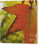 Red Autumn Leaf Wood Print