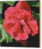 Red Begonia Wood Print