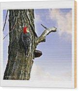 Red-bellied Woodpecker - Male Wood Print