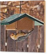 Red-bellied Woodpecker At Lunch Wood Print