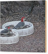 Red Bellied Woodpeckers Male And Female Wood Print