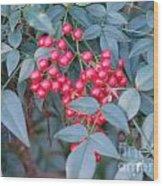 Red Berries 1 Wood Print